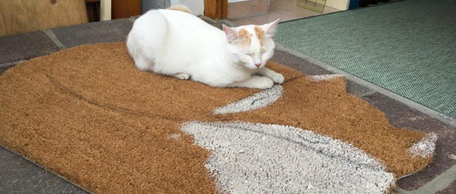 Fuchs Fußmatte DIY